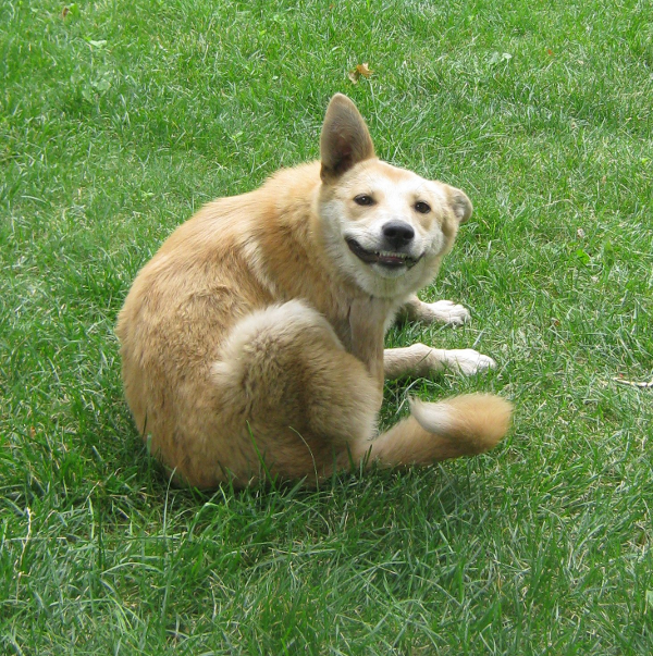 Счастливая воронежская собака